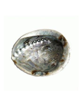 abalone-schelp-klein